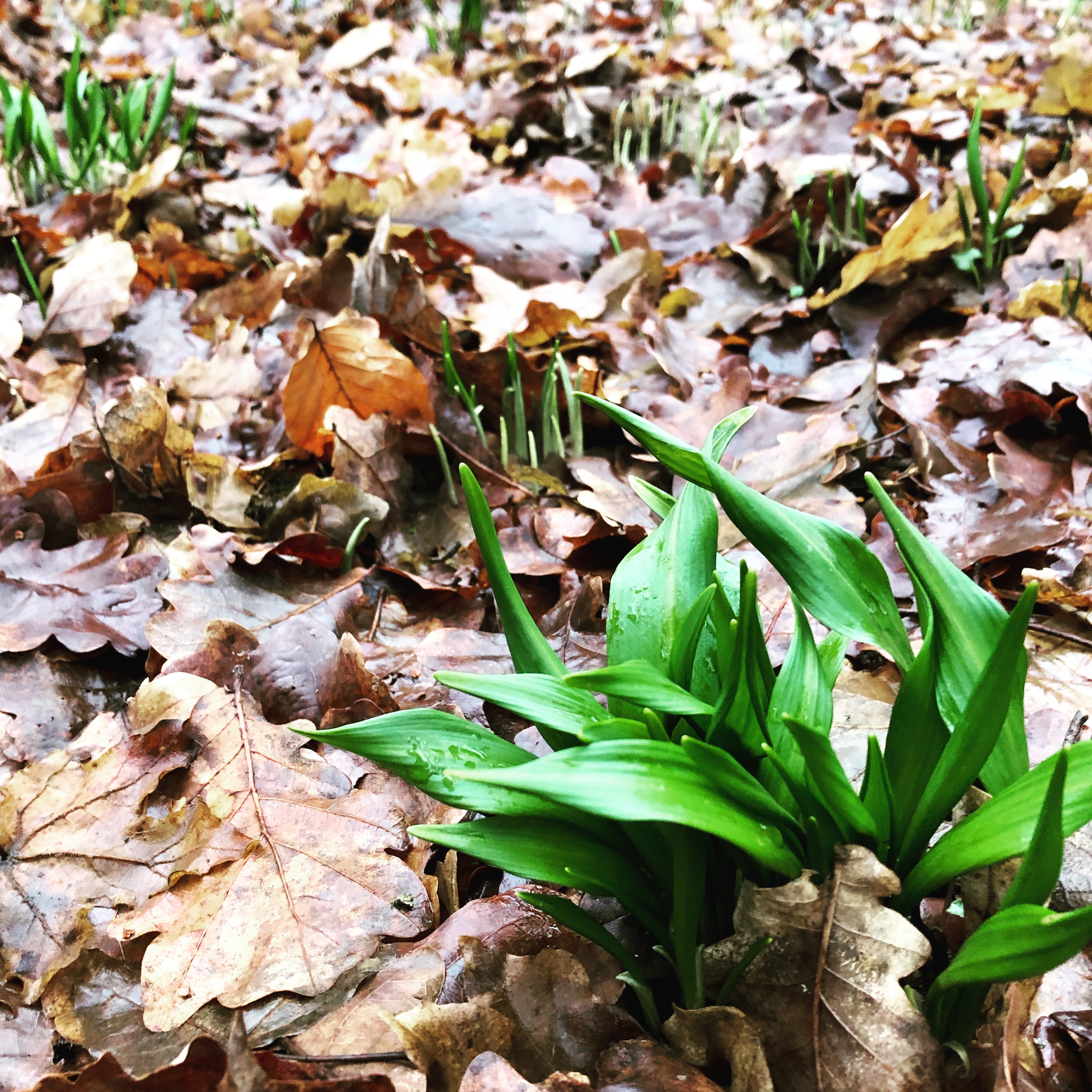 Foraging Workshop & Walk - 'Introduction to Winter Foraging' at Arley Hall
