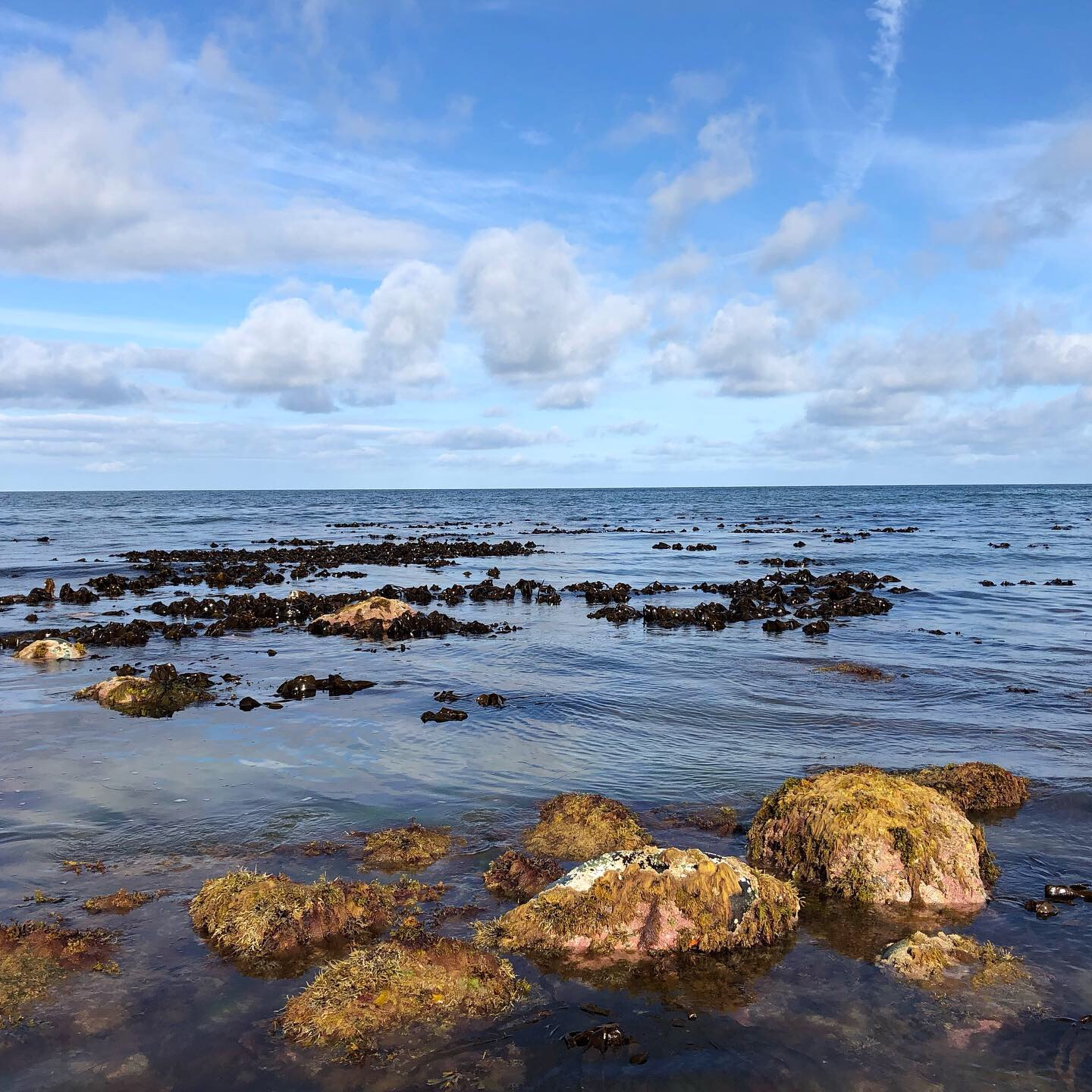 Coastal Foraging and Cooking - Foraging Workshop and Lunch at Conwy