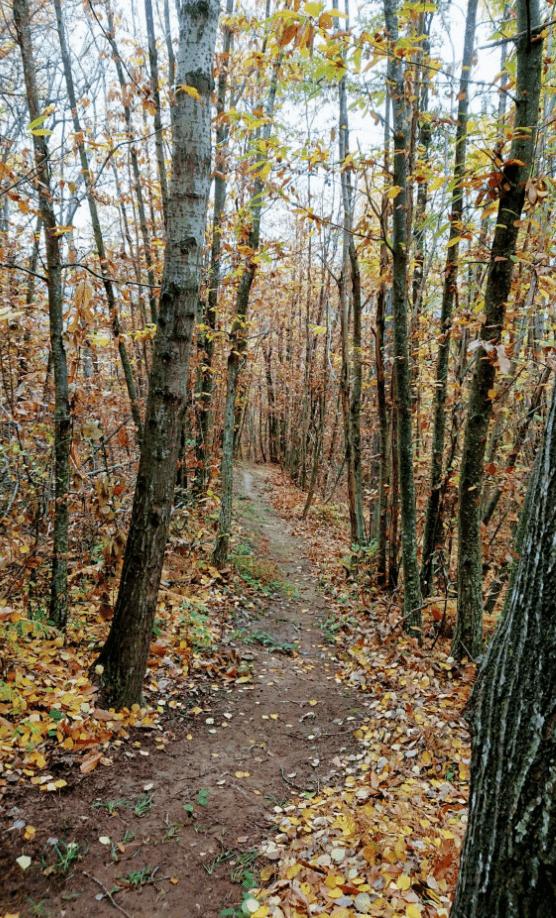 Il trail prende il nome da uno dei rettili tipici delle nostre zone, per via dell'andamento serpeggiante e intrecciato tipico dei serpenti in posizione d'attacco. Se avete voglia di curve strette e passaggi tecnici questo è il trail che fa per voi!