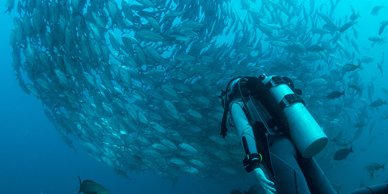 SCUBA Diving close up with school of fish