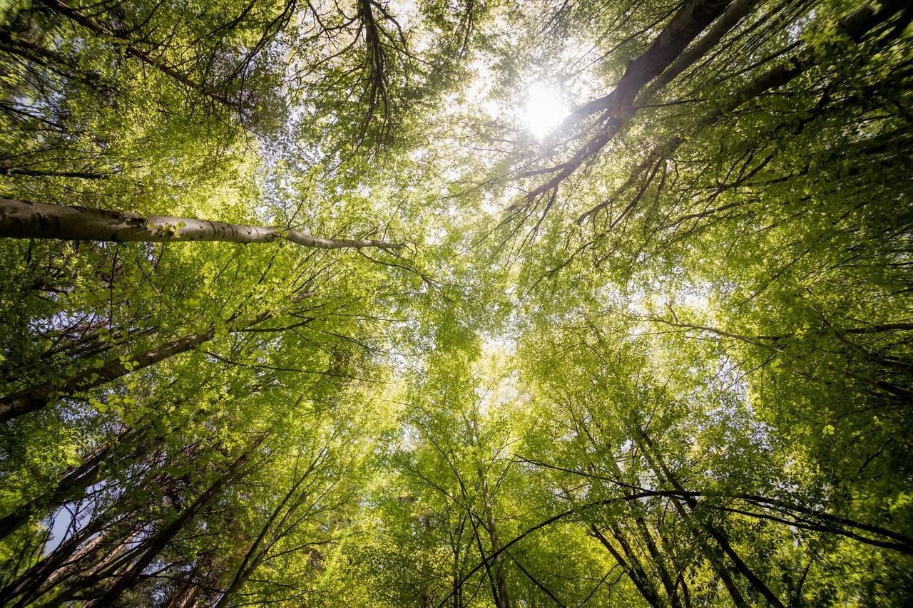 Ansamblu rezidențial cu 13 ha de pădure transformate în parc natural