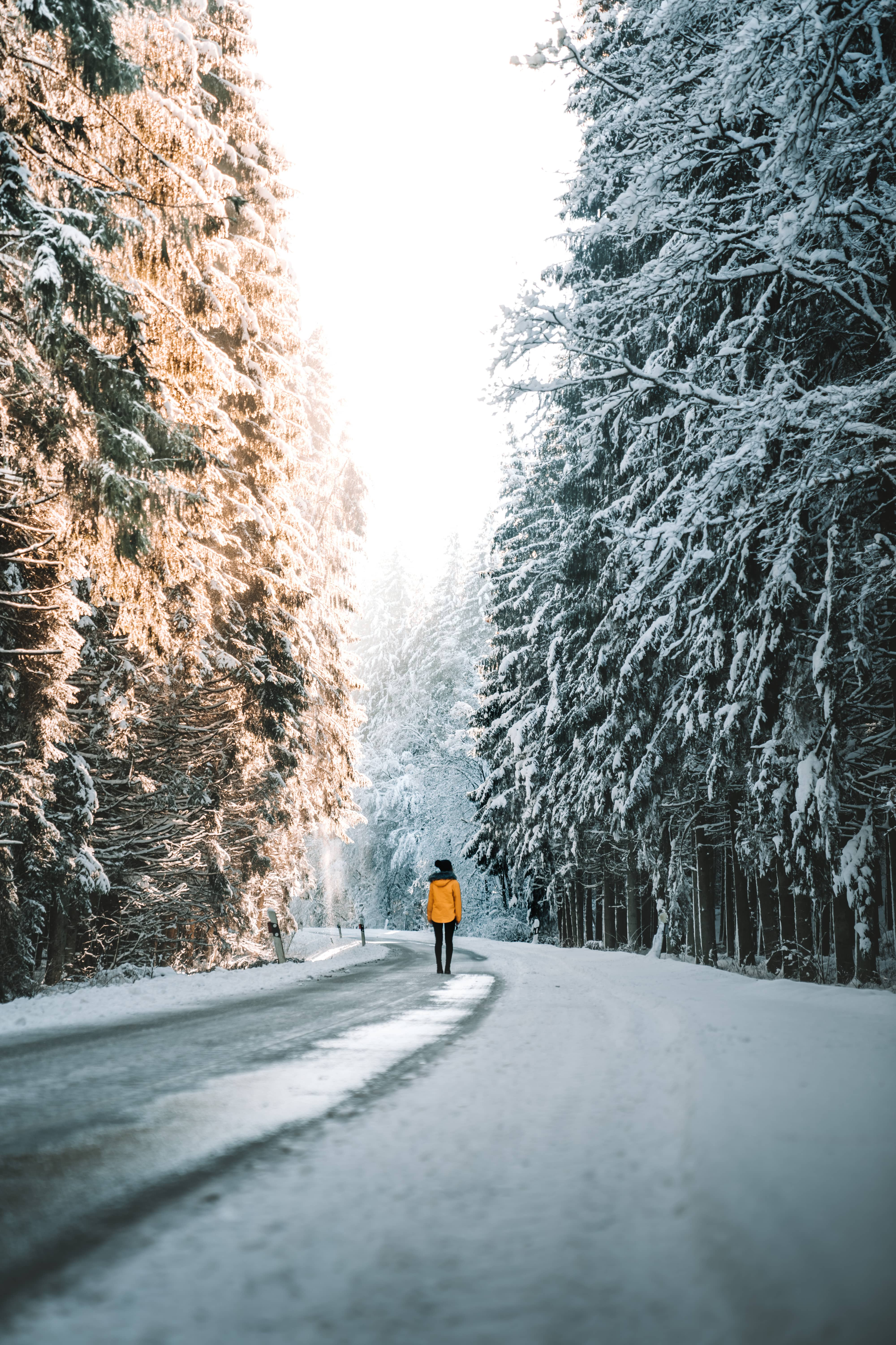 Person with yellow jacket standing in the distance on a road surrounded by big trees covered with snow