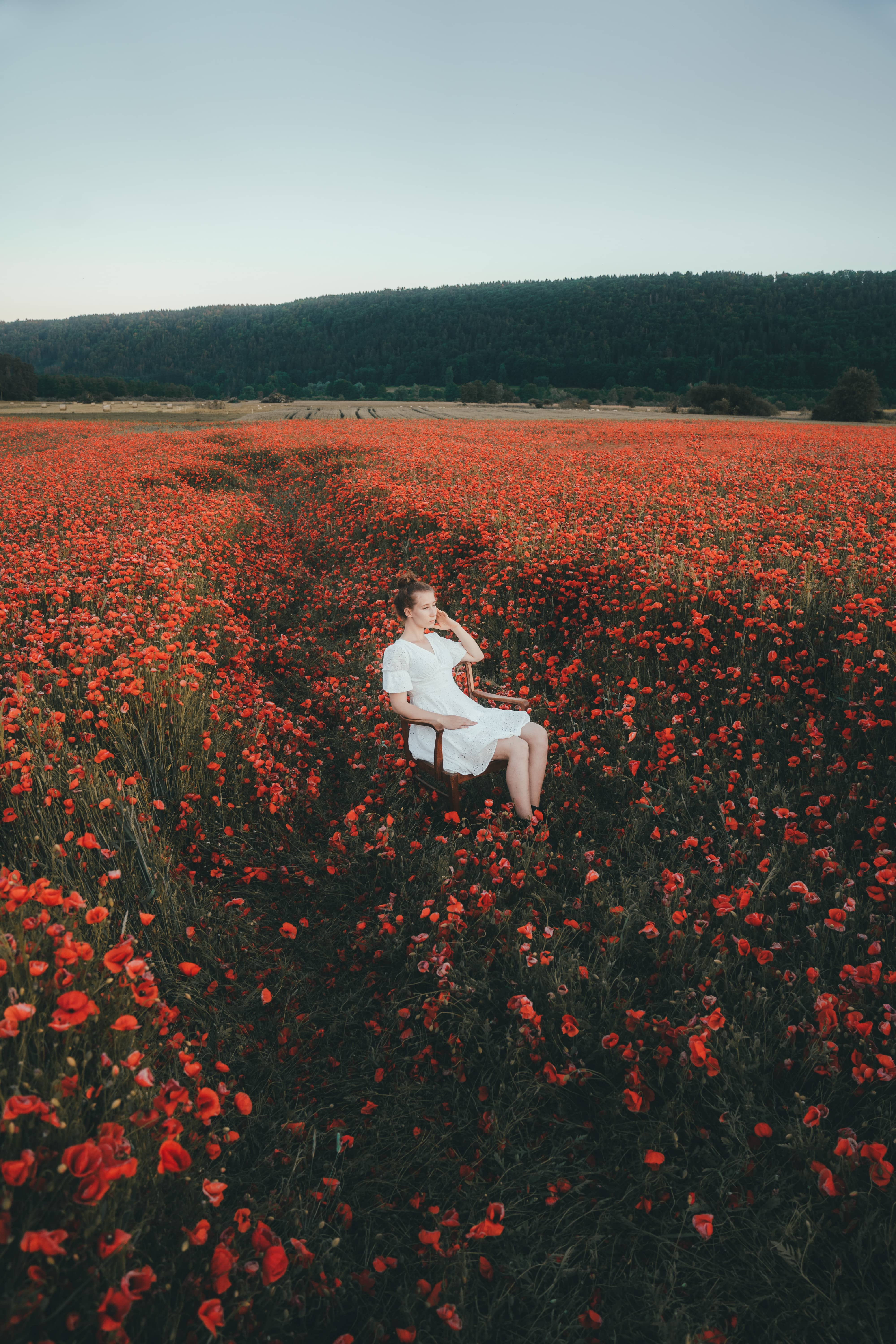 Girl in fashionable dress sitting on a chair in the middle of a poppy field surrounded by flowers
