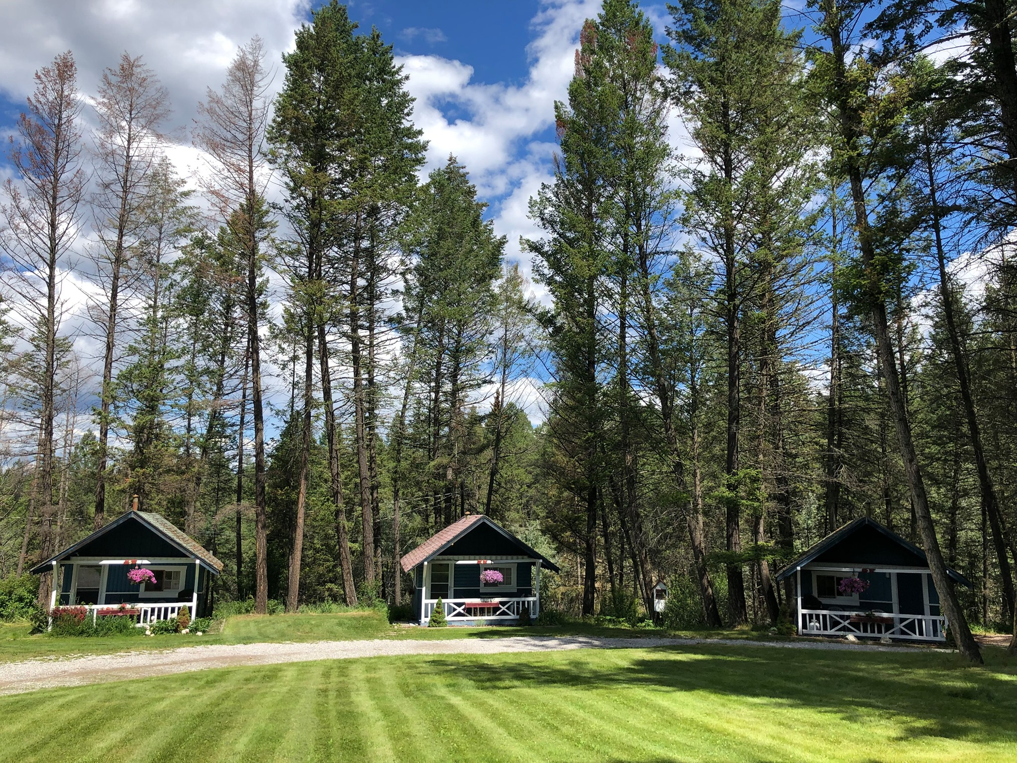 Cabins, tall trees, green area