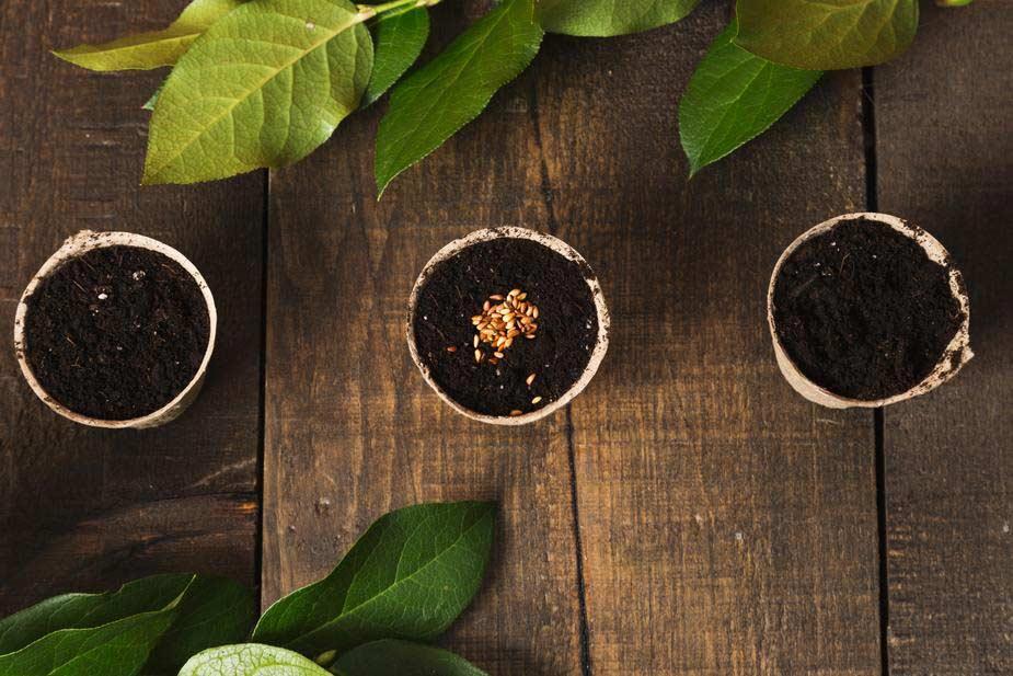 blog jardinage
