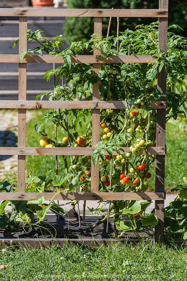 Front yard food garden