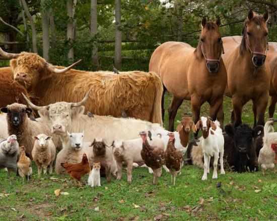 21-Kid- friendly-animals-at-the-farm-