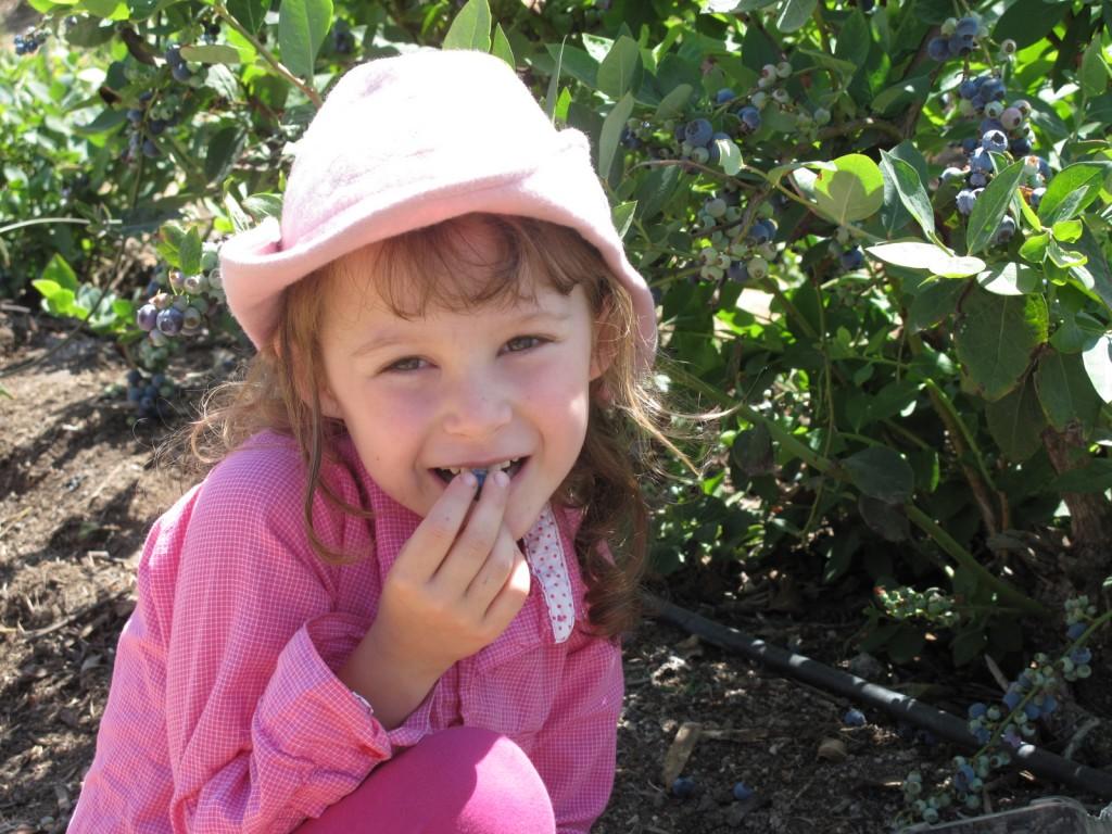 21-Kid- friendly-berry-picking