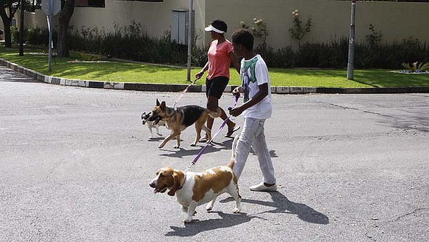 10-ways-happy-pet-walk