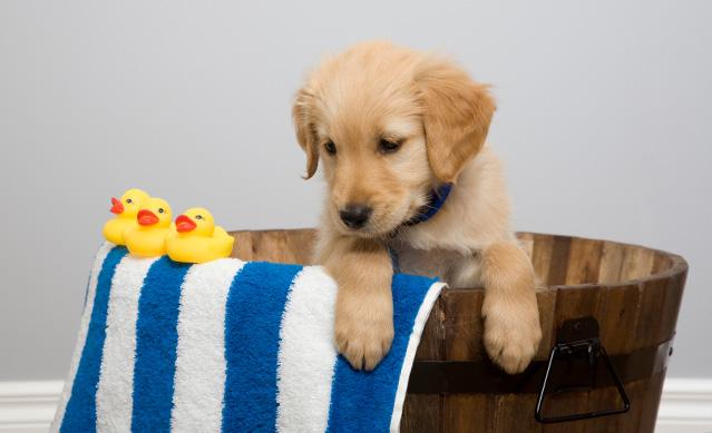 10-ways-happy-pet-bath