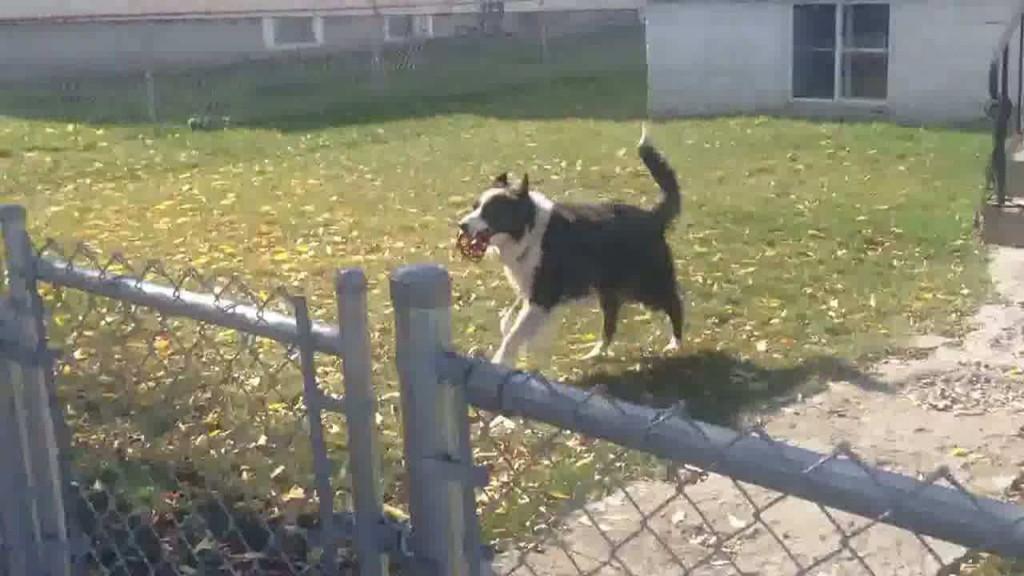 10-ways-happy-pet-fresh-air