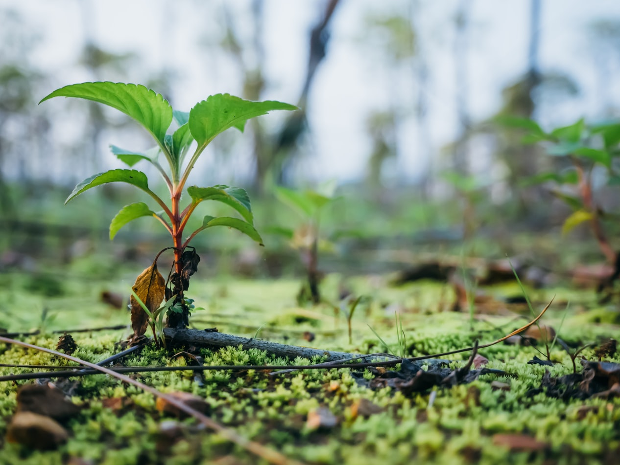 Becoming a climate positive workforce