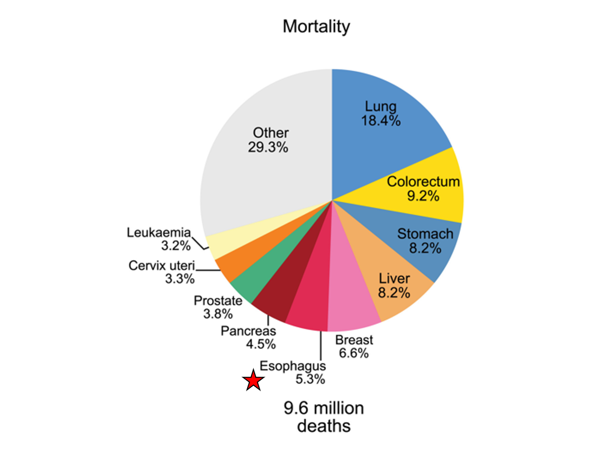 Pie chart of cancer-related mortality