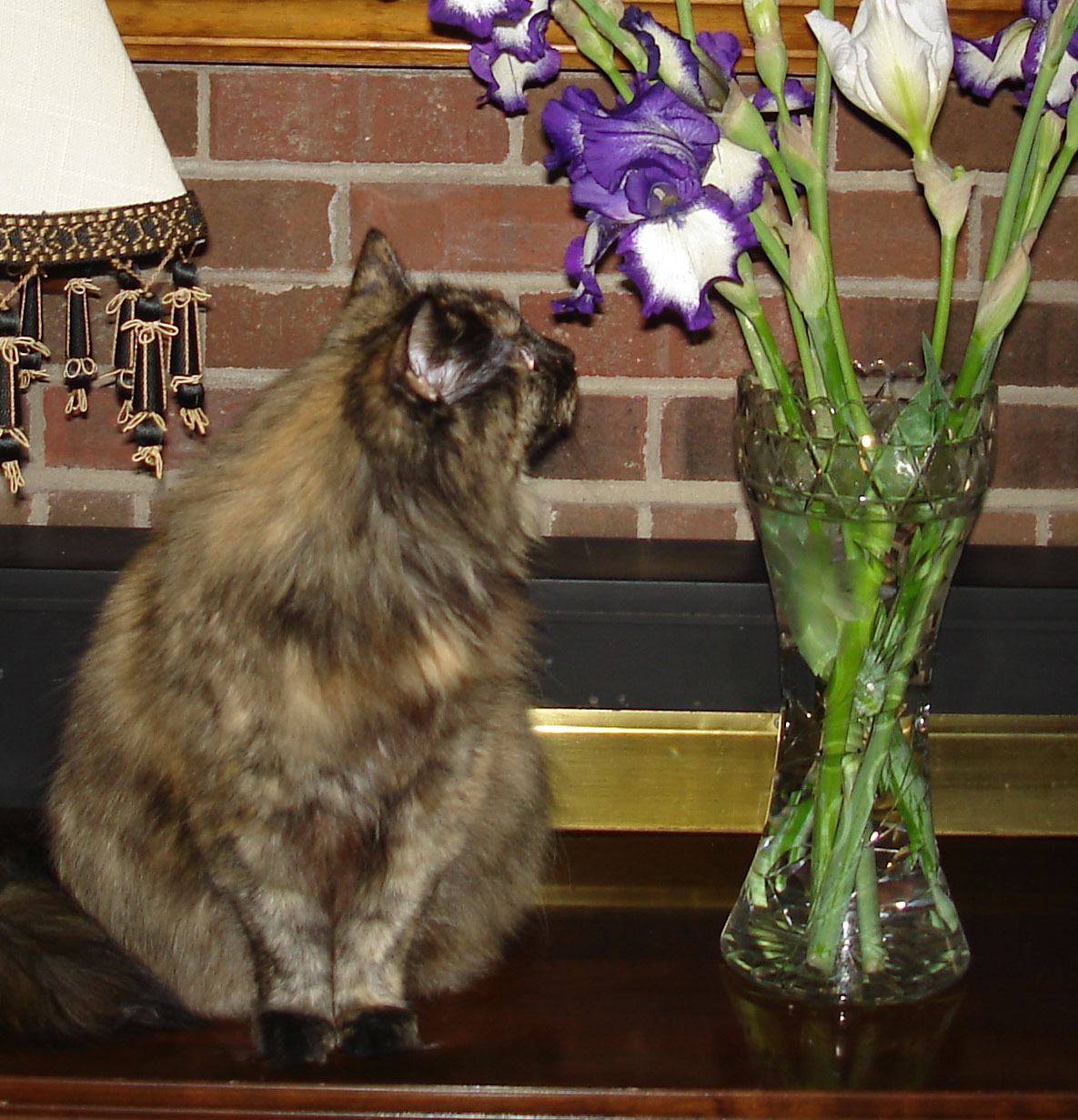 Cute cat Savannah is enjoying smelling the flowers brought in from the garden.