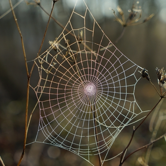 Network consolidation. A spider net during spring in a forest.