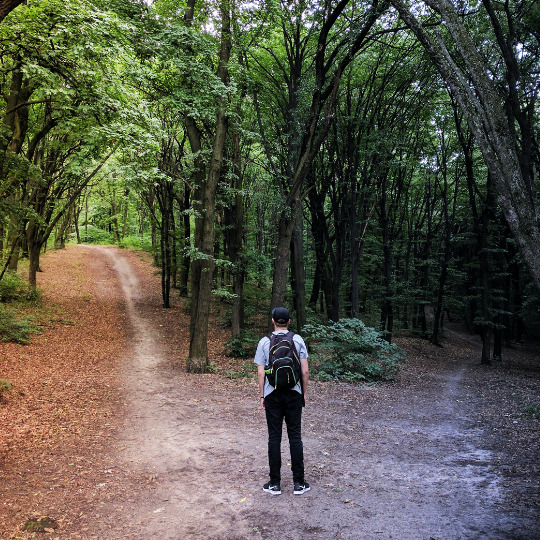 Network vendor selection. This photo shows a forest during a summer day and a forest during fall. A man is standing in the middle, waiting to make a decision.
