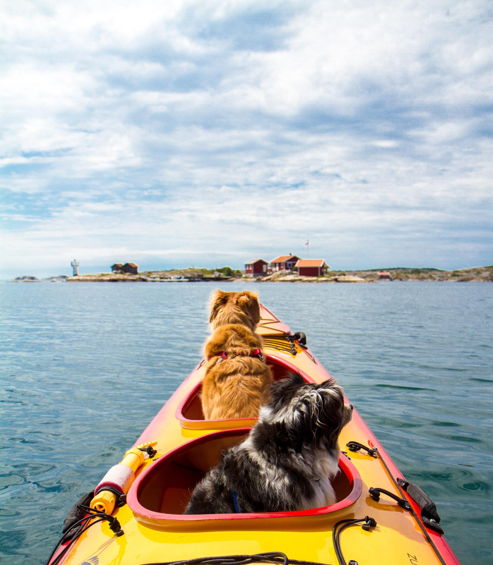 Kayak i flotte omgivelser på Senja