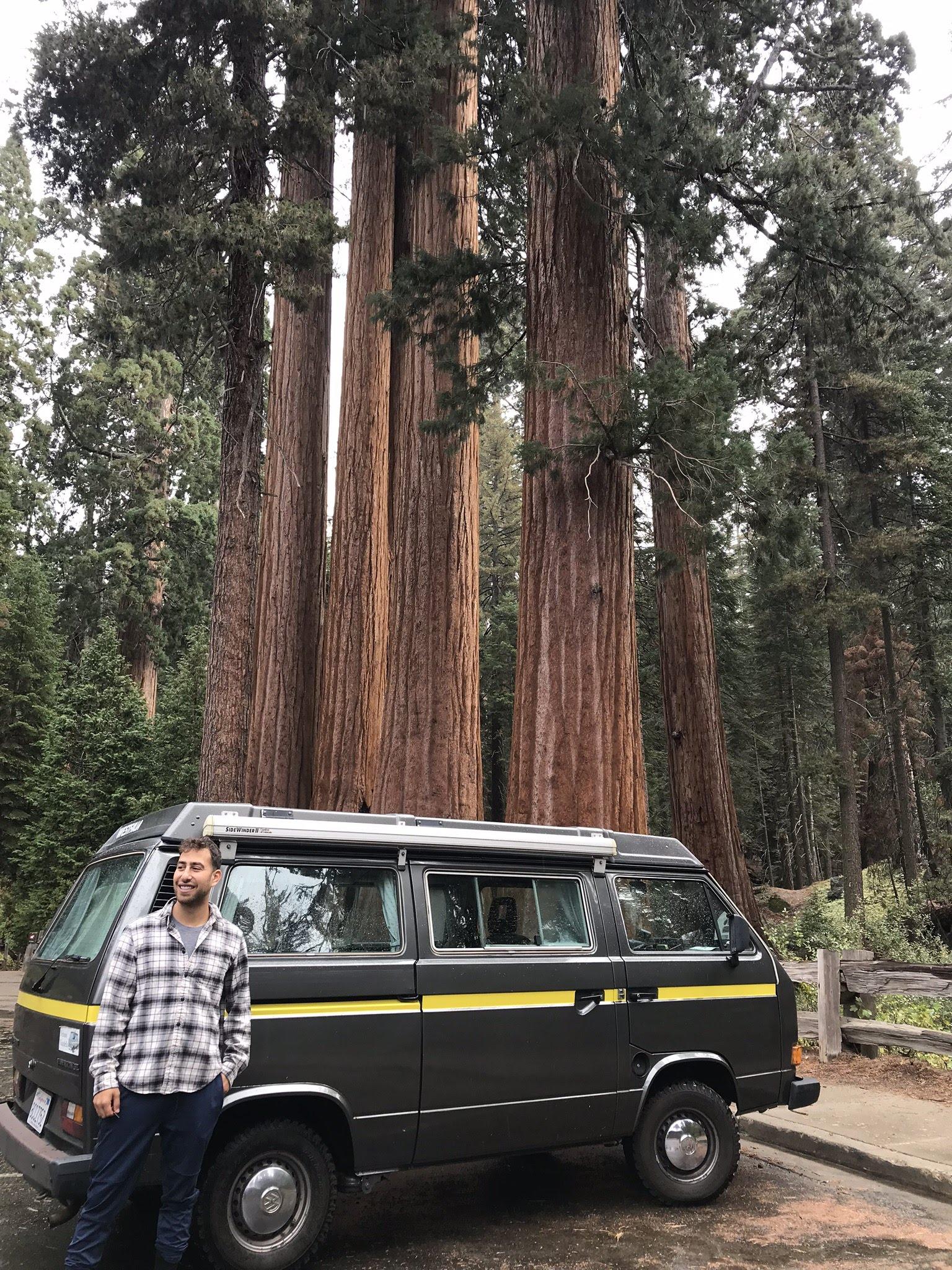 volkswagen van in the trees