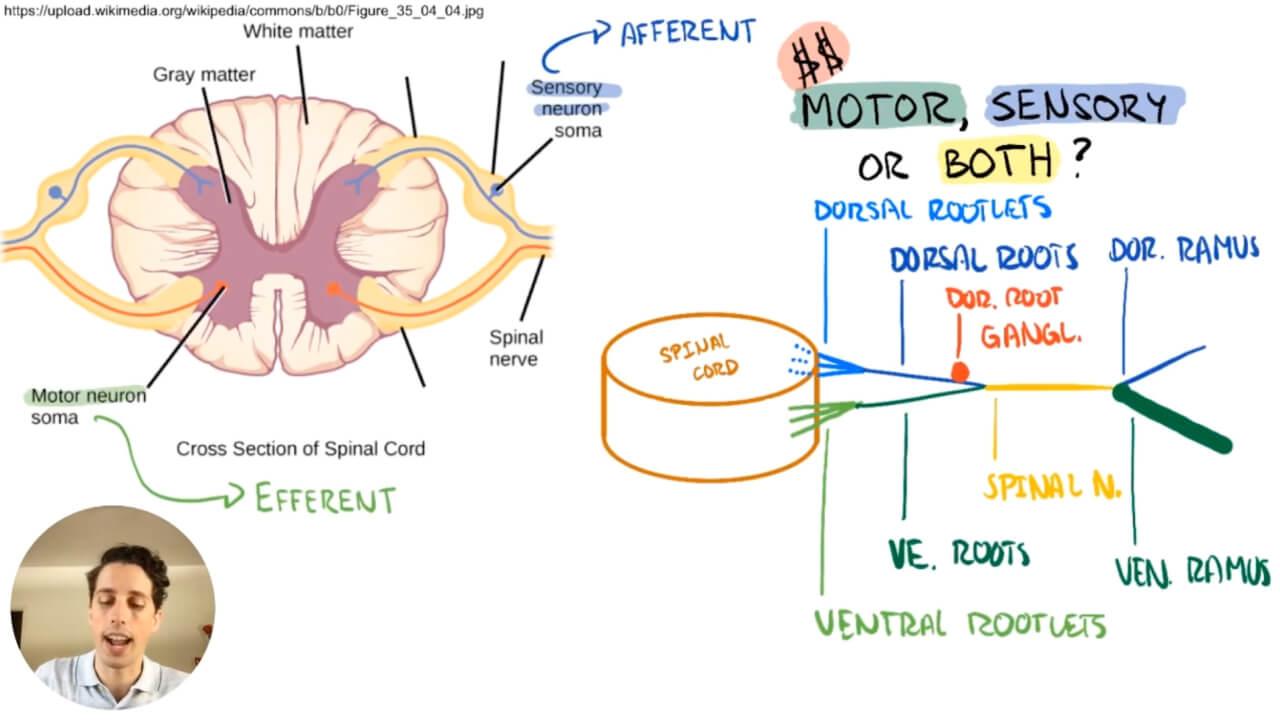 Lance Good teaching Gross Anatomy