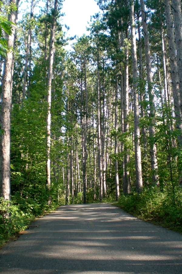Paved trail through the woods