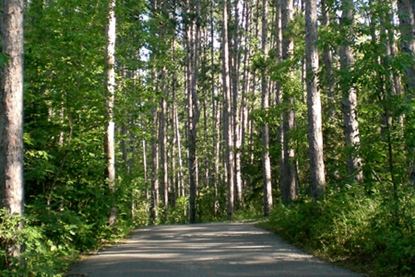 Paved trail through the forest