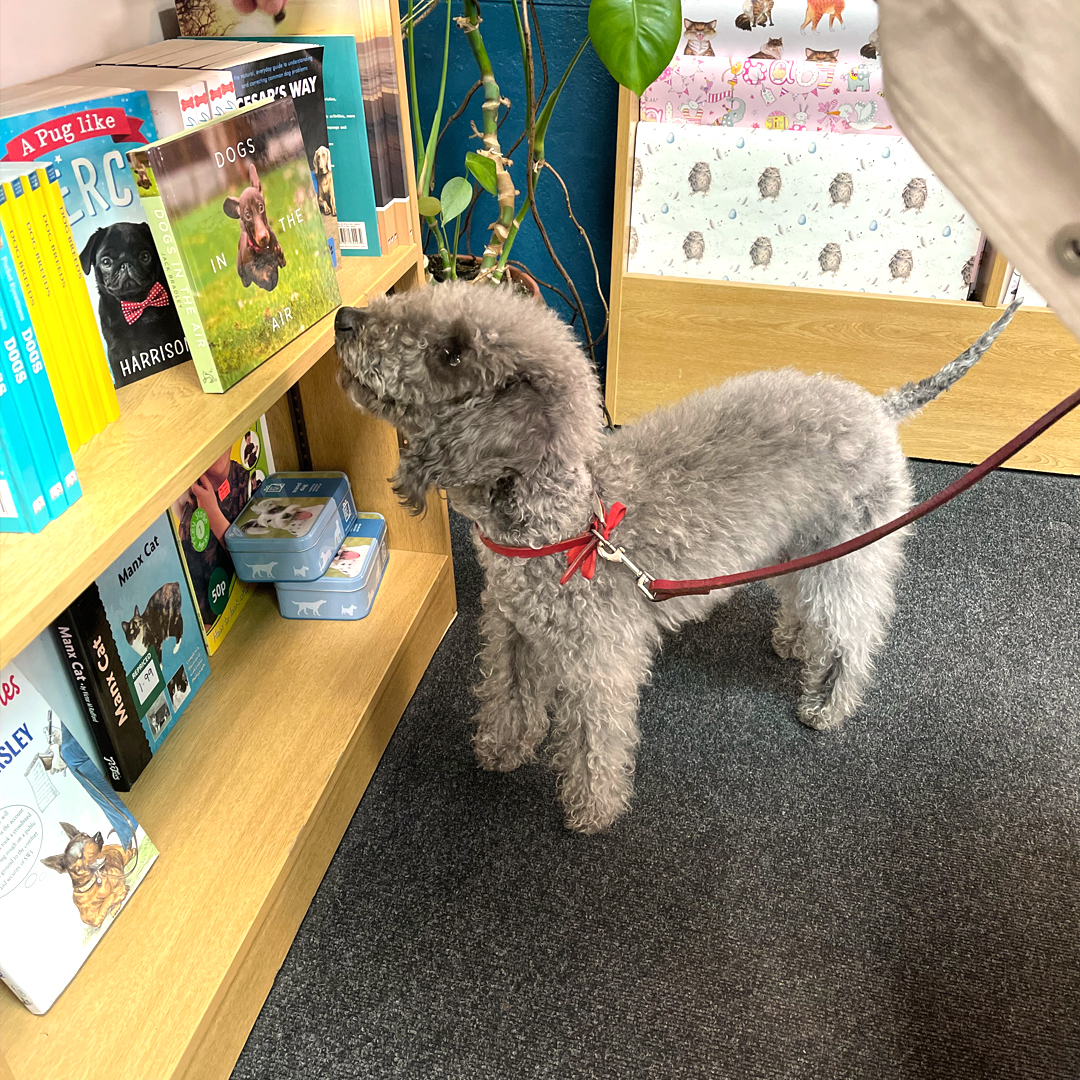 image of dog reading book in bookstore.