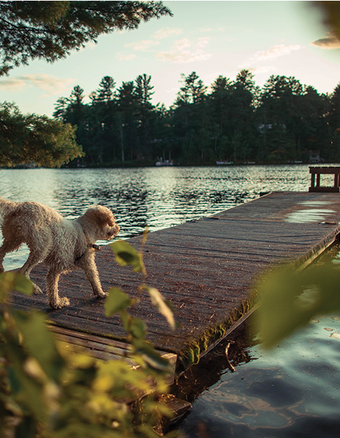 Go Beyond Charlotte NC to Lake Norman with your dog training.