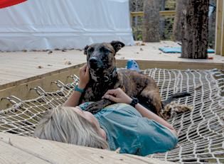 Lounging in a hammock with your dog.