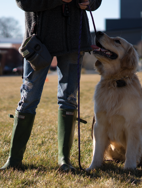 Charlotte Area Dog Training
