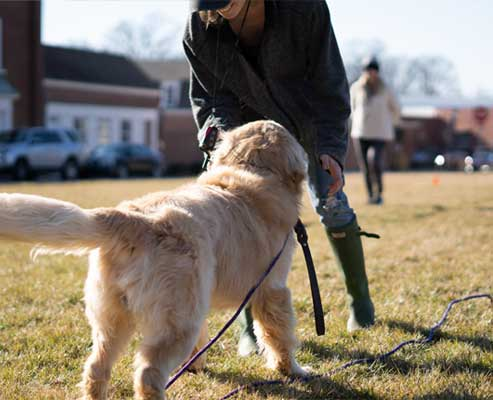 Off leash dog training in and around Charlotte NC.
