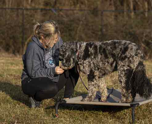 Charlotte NC Dog trainer Samantha Scarborough.