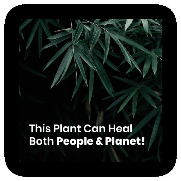 hemp facebook advertisement