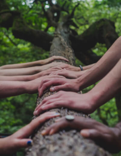 A tree branch with different peoples hands on it