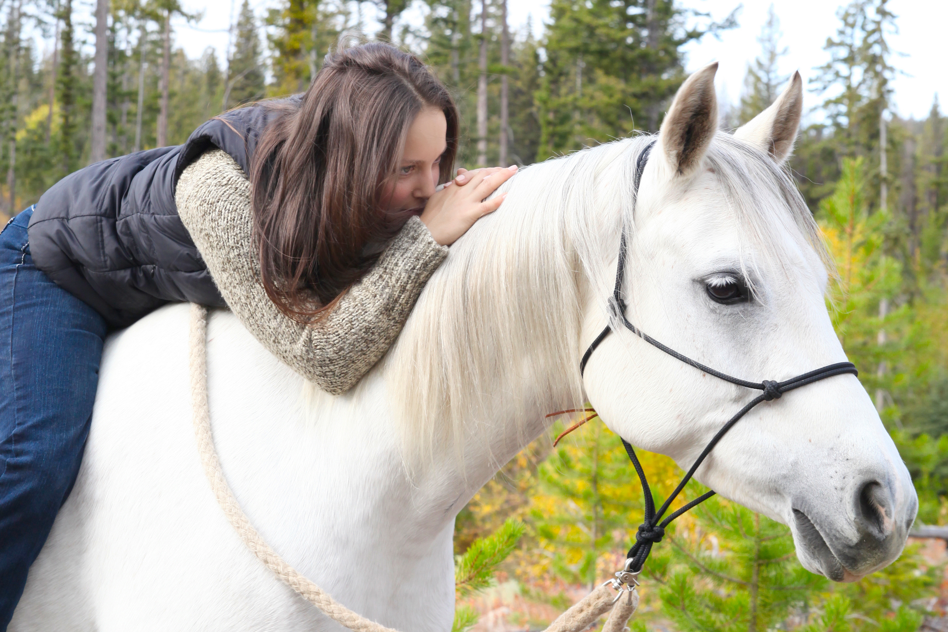Owning a horse: The Financial Factor