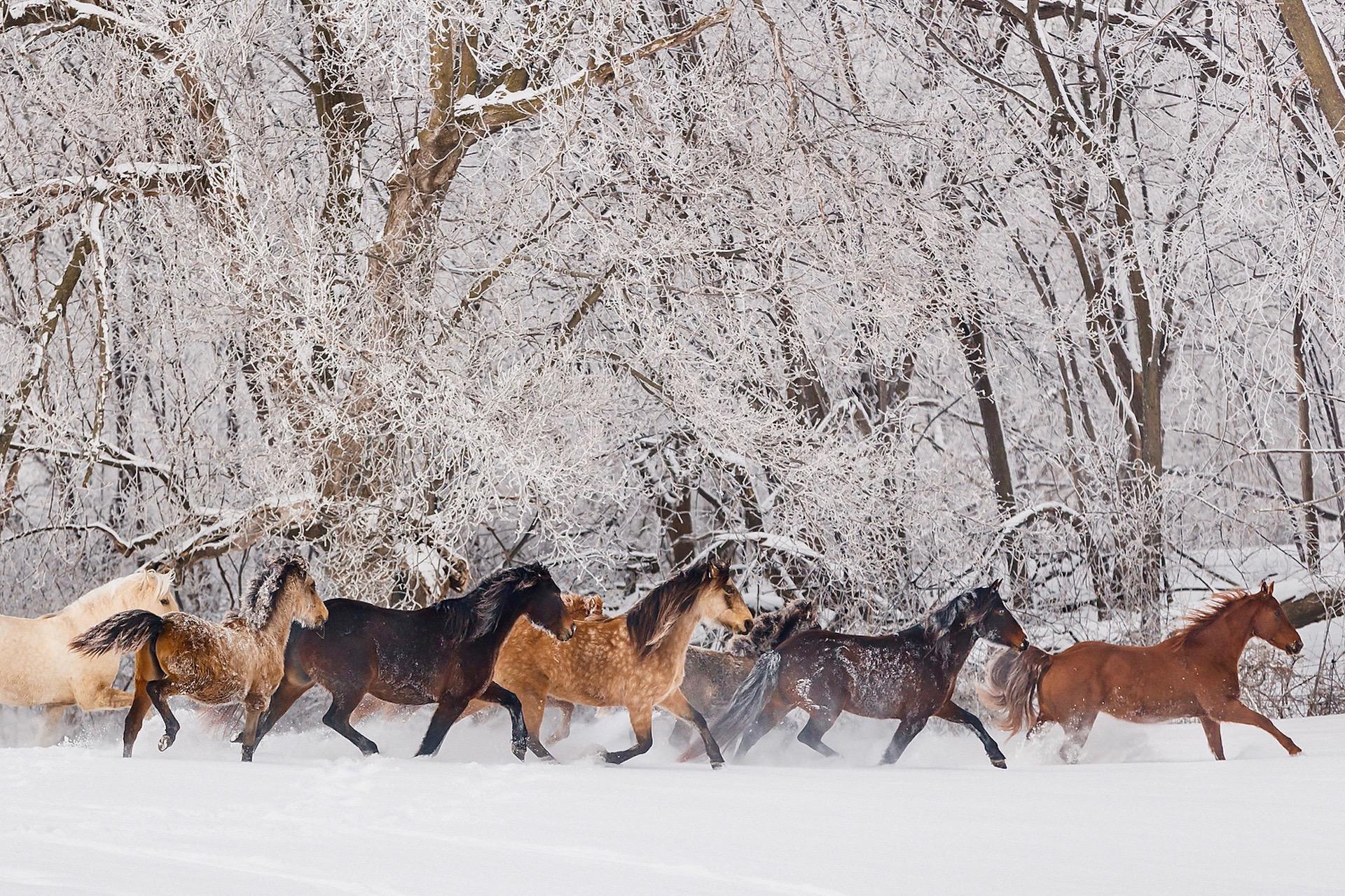 Catching a Runaway Horse