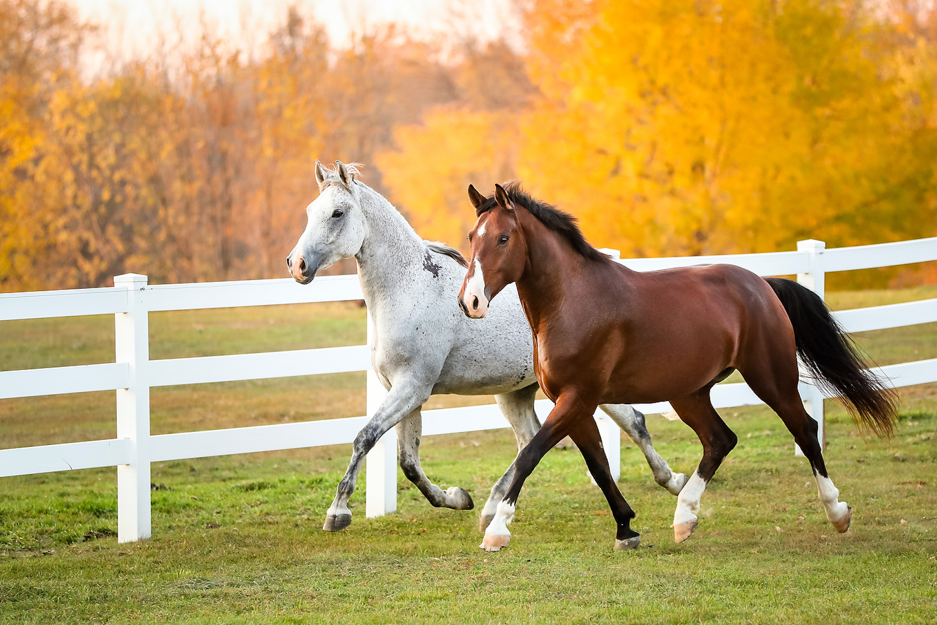 What's my horse's body condition score?
