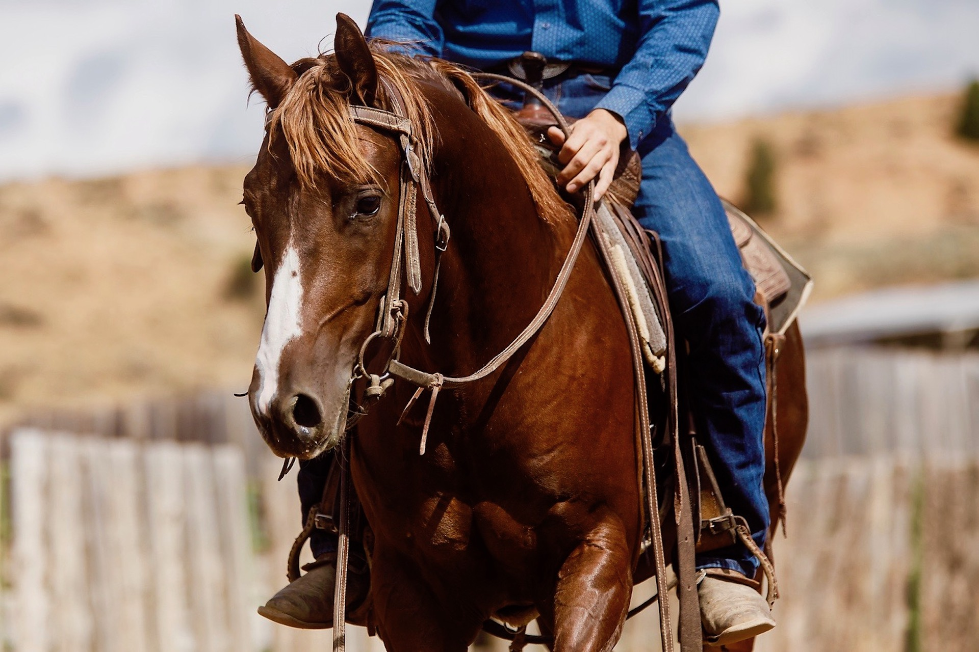 Discipline Spotlight: The Cutting Horse