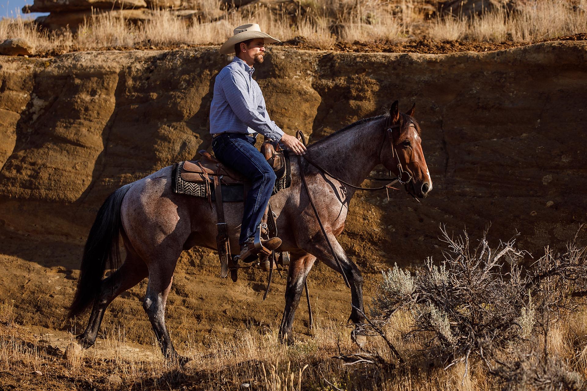 The Quarter Horse