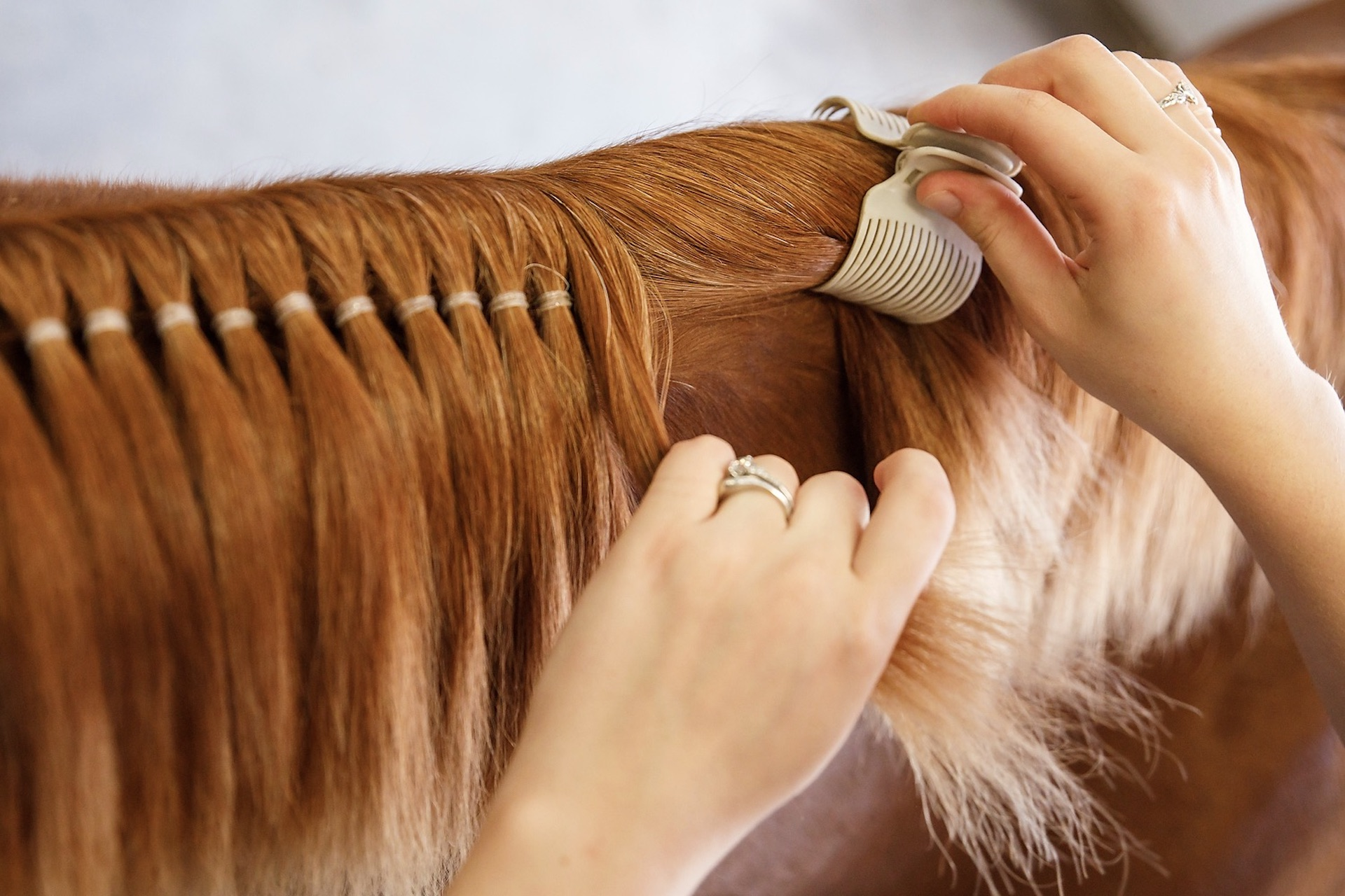 Manes & Tails for the Show Ring