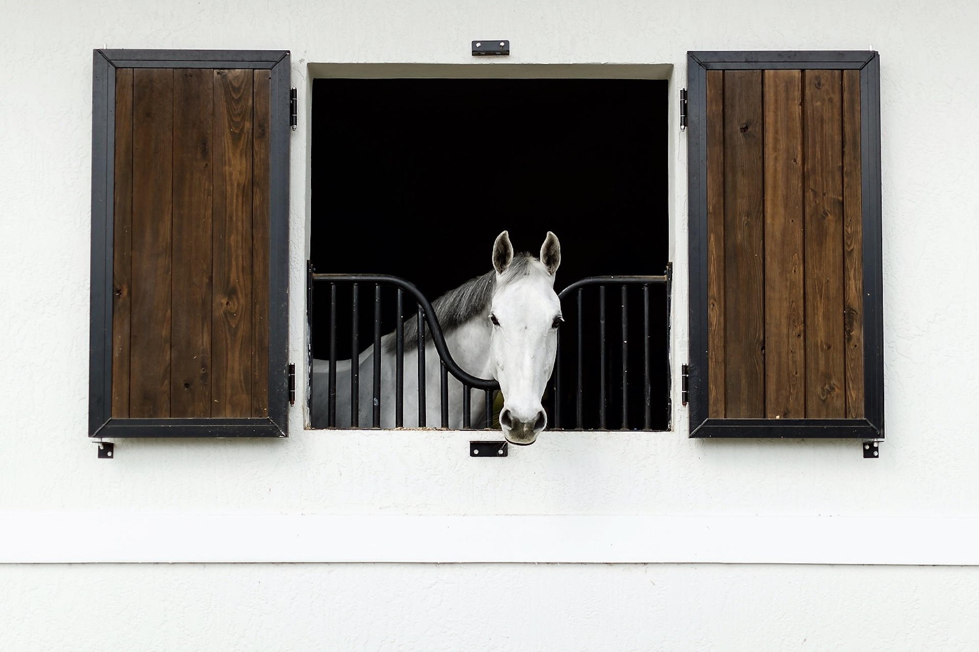 Spring-Cleaning: Equestrian Edition!