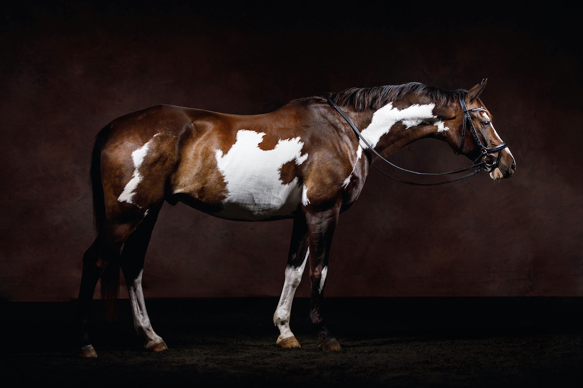 Equine Marketing : Advice from a Professional