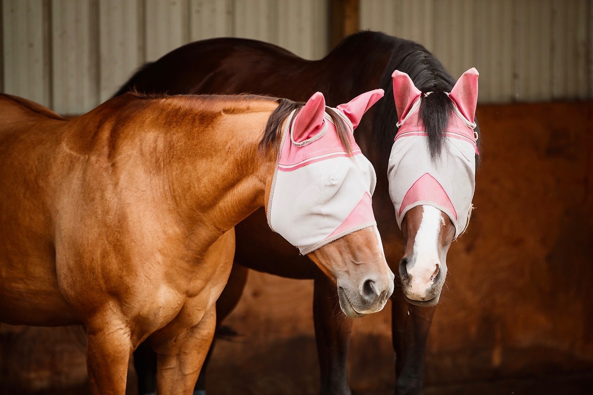 Equestrian Survival Guide : Fly Control