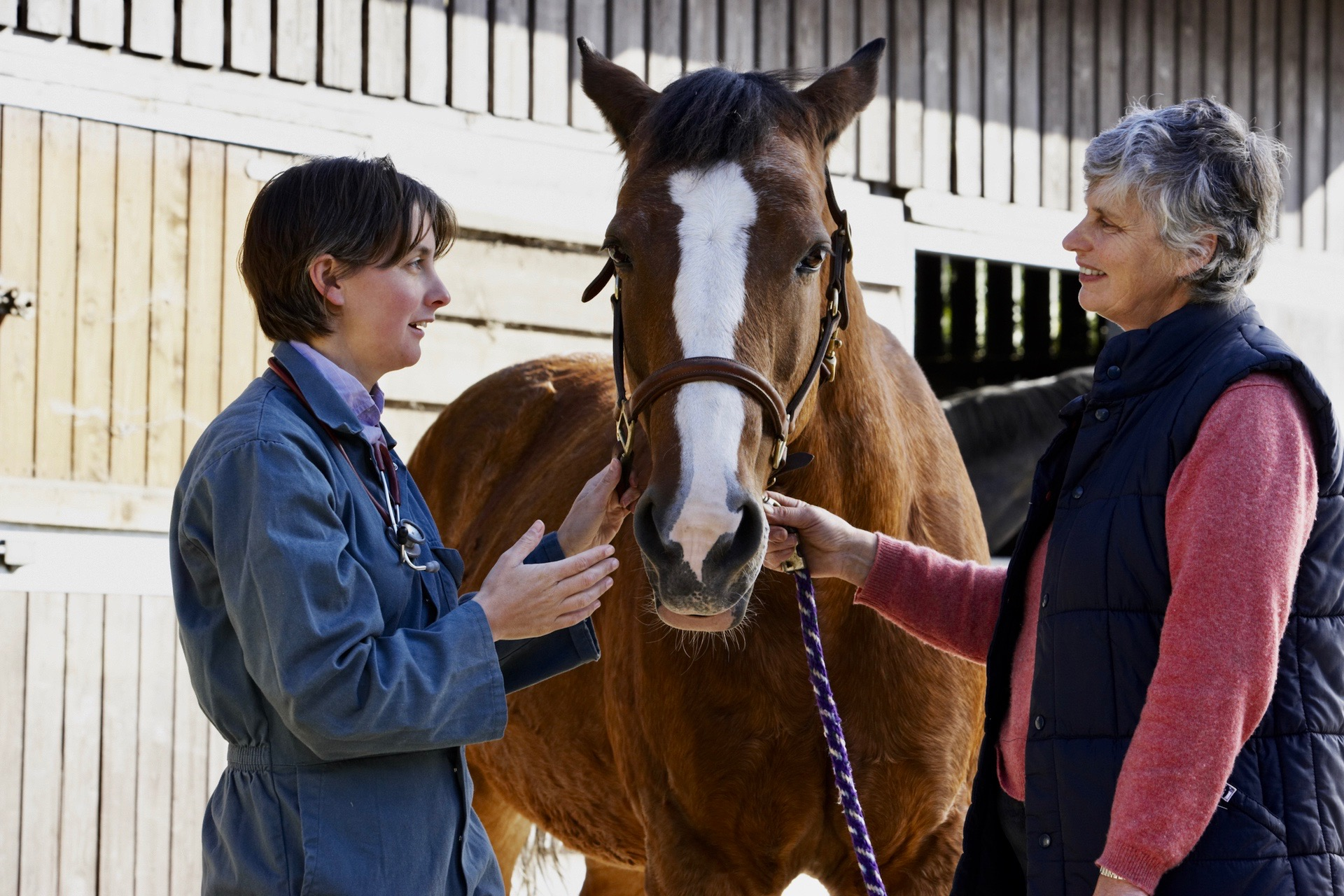 Determining Healthy Weight in Horses