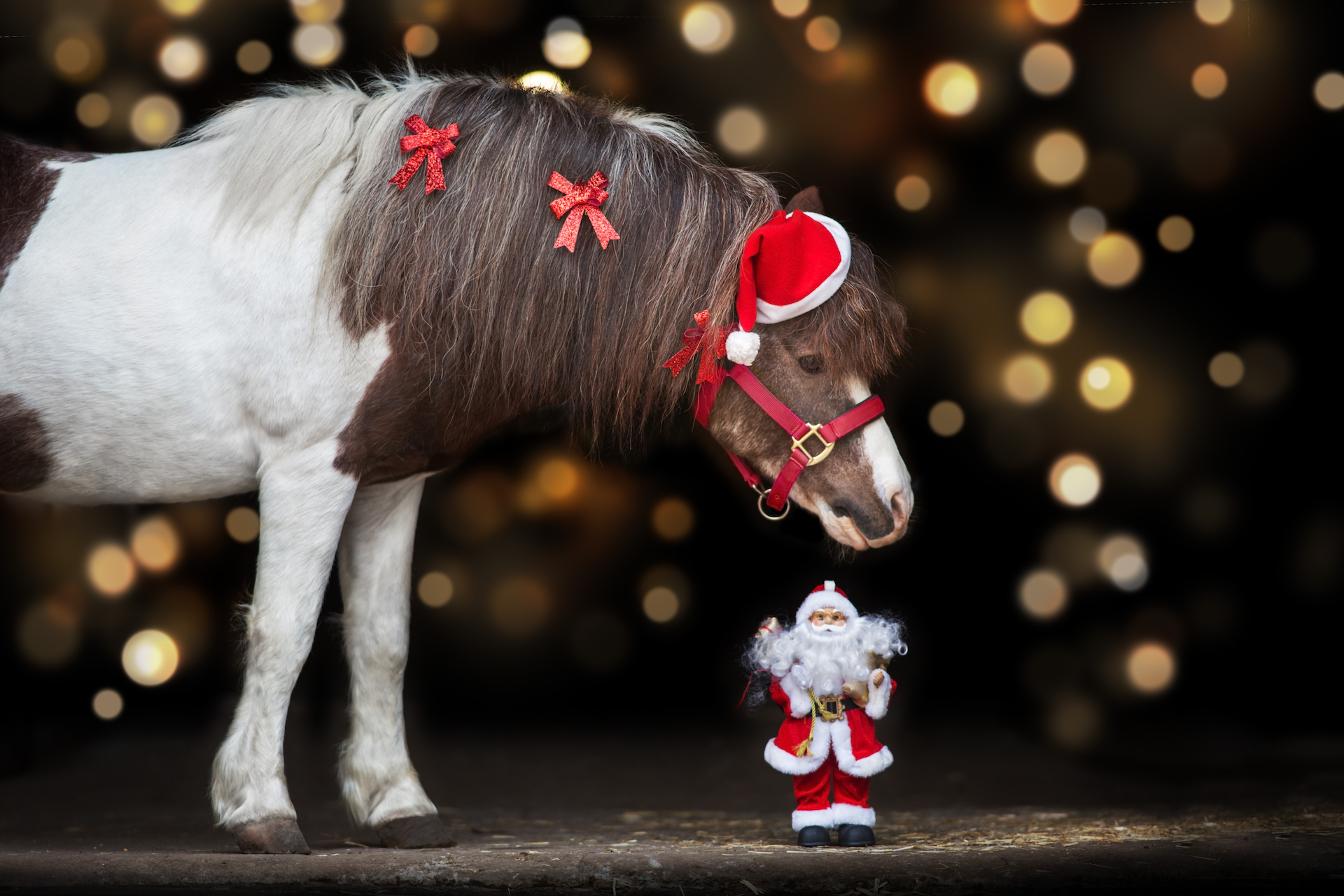 10 Fun Gifts for Equestrians