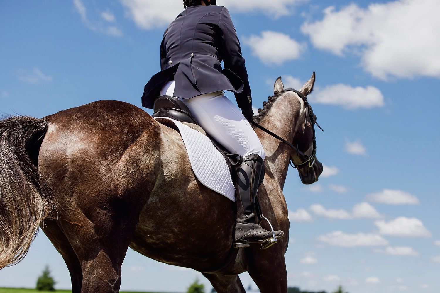 Finding Your Niche In The Horse Industry