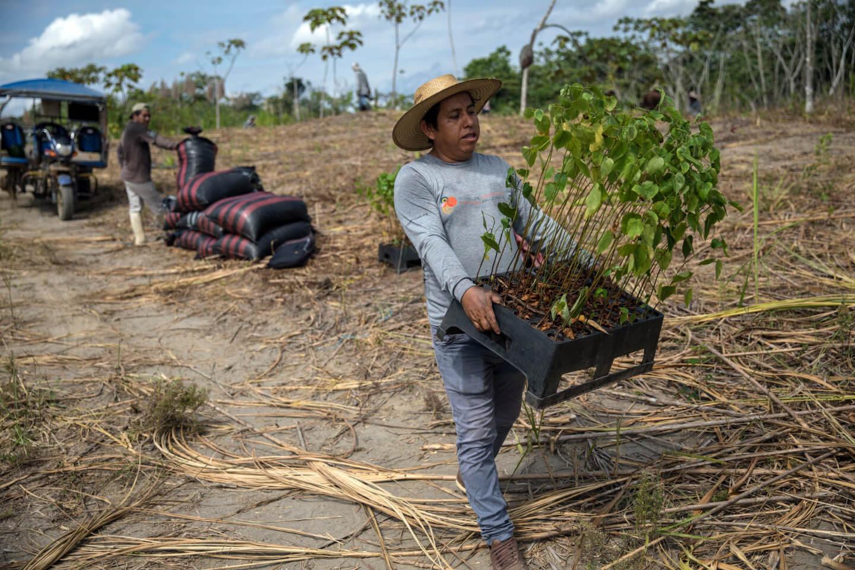 amazon tree planting