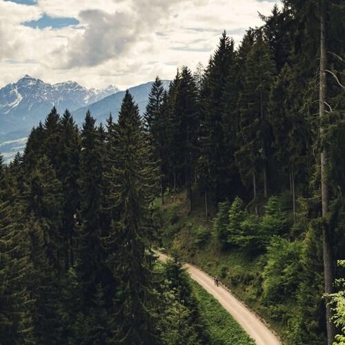 Camino entre un bosque