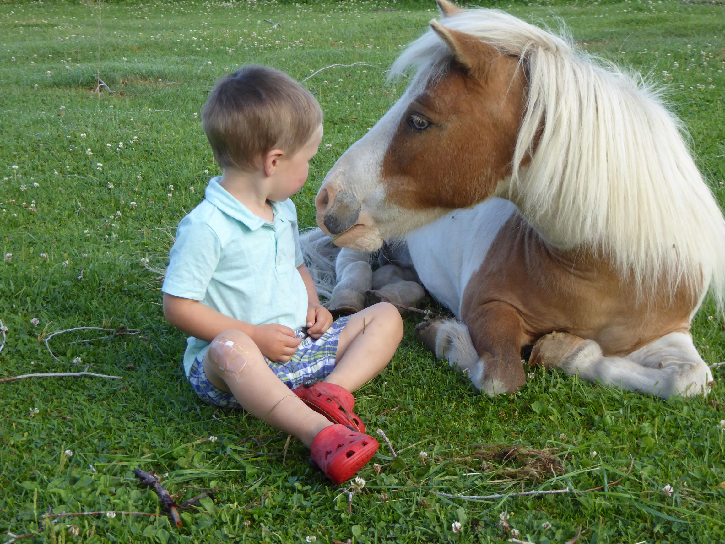 Little Titus and the pony