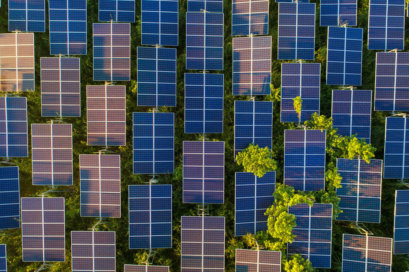 Solar panels surrounded by trees.