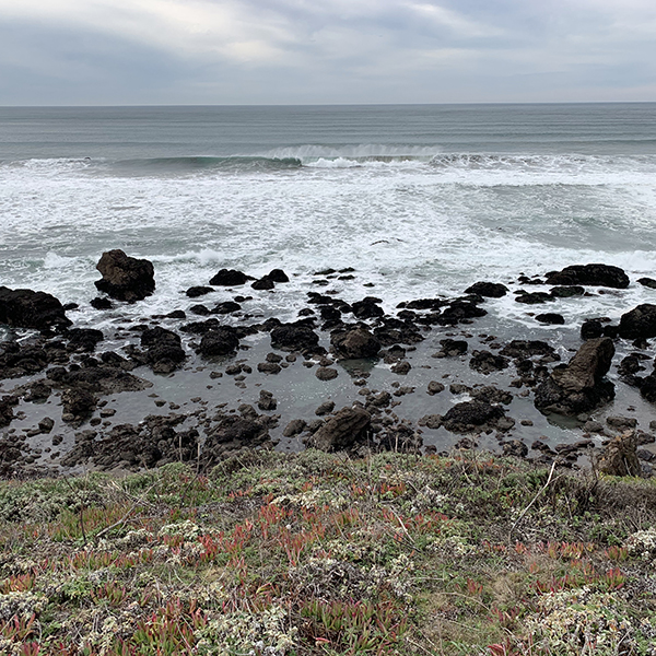 California ocean coastline with rocks and vegetation in the foreground